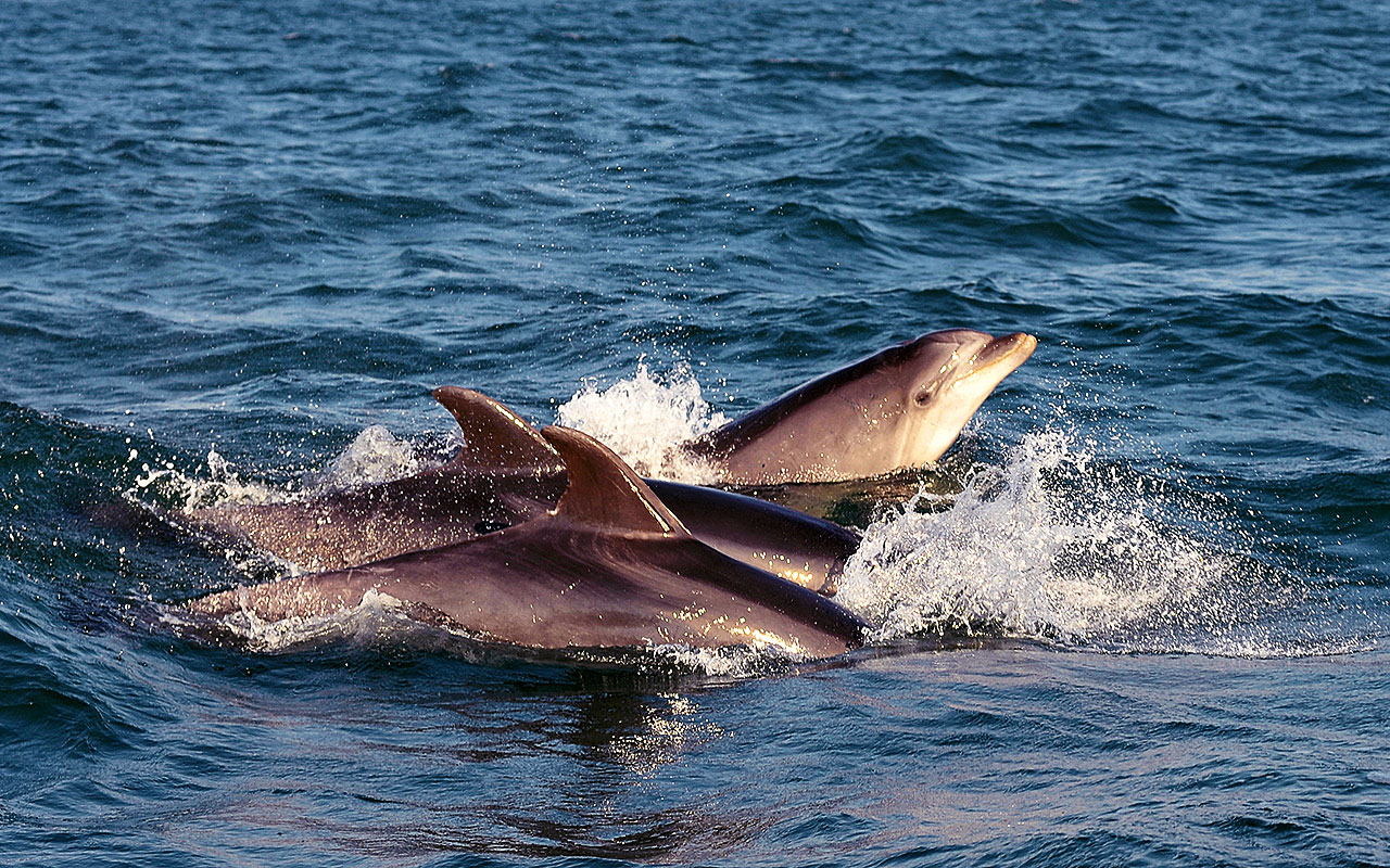 SETÚBAL, THE CITY OF DOLPHINS,